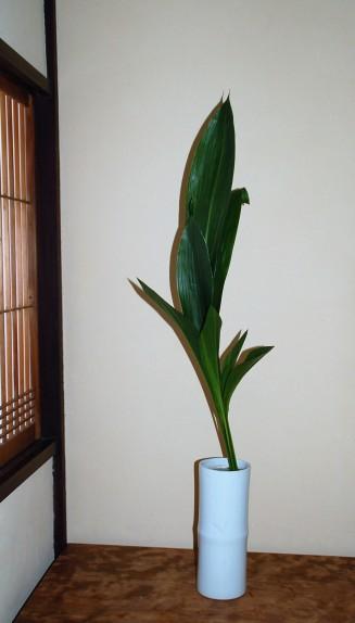 Traditionnel, Seika dans un Tokonoma